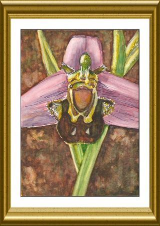 Bee Orchid painting