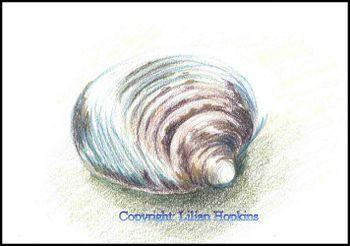 Still Life Shell 2