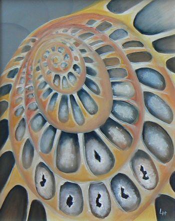 Spiral: Ammonite 2