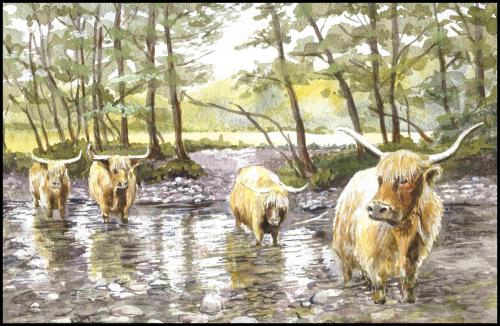 Highland Cattle On Mull, Scotland