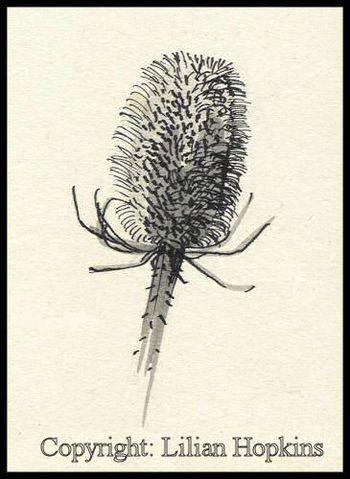 Ink Sketch 'Teazle'