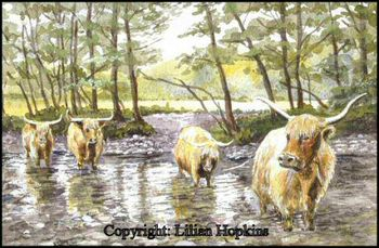 Highland Coos On The Isle Of Mull, Scotland